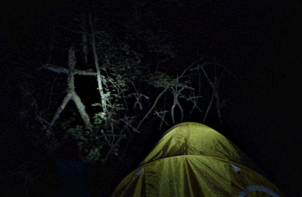 Simpatici ritrovamenti nel bosco